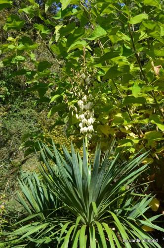 ménage automne,plectanthrus,feuillages 043.JPG