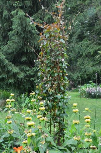 jardin,chez Bernadette,puces,cygnes,pluie 108.JPG