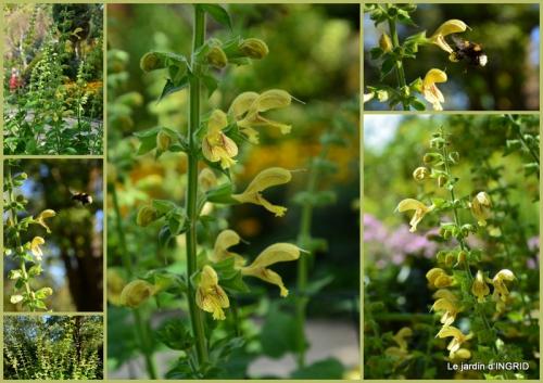 2015-09-12 jardin ,bouquet.jpg