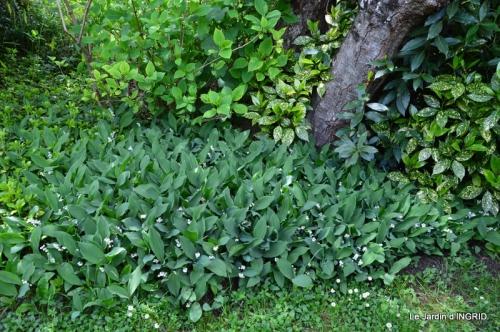 jardin avril 101.JPG