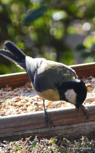 les oiseaux,les poules d'eau 023.JPG