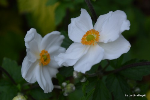 jardin,les filles,fleurs Peyrichou 161.JPG