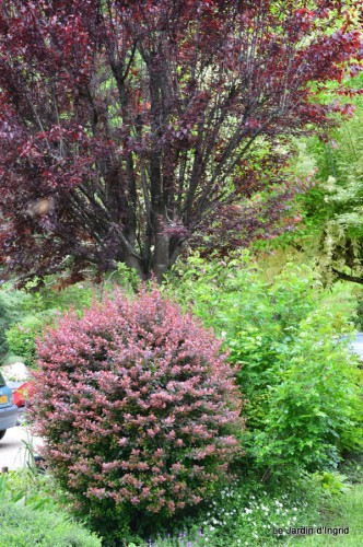 roses,Lalinde,toit cabane,pourpre,eglise,jardin tondue 094.JPG