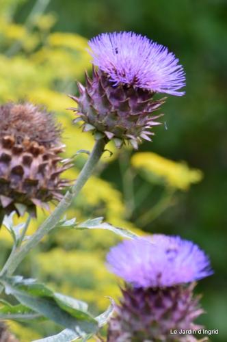 tournesols,pt jardin,nénuphard,libellules,lavande bouquet,carava 085.JPG