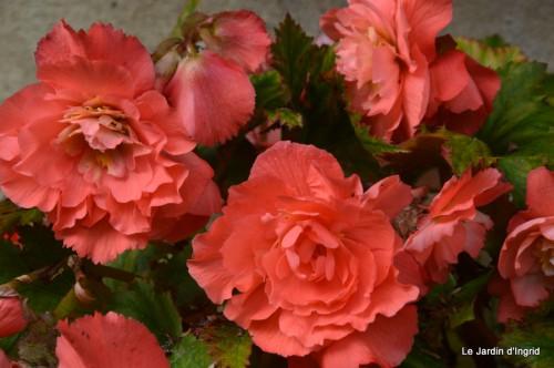 jardin,les filles,fleurs Peyrichou 020.JPG