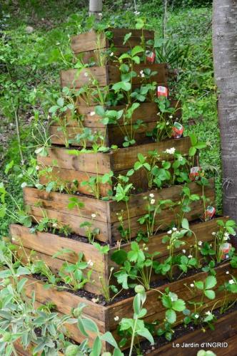 pyramide de fraisiers,toit végétalisé 019.JPG