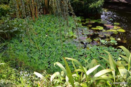 ménage automne,plectanthrus,feuillages 121.JPG