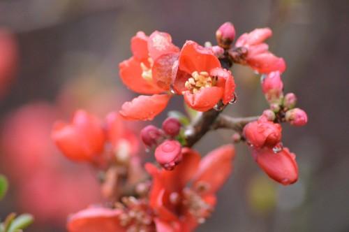 bouvreuils,chatons,fleurettes,pluie,orchidee,écureuil,vues du ja 037.JPG