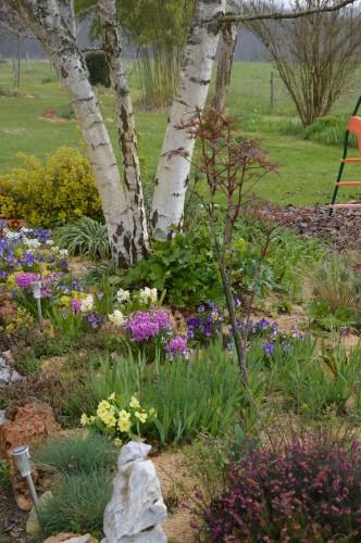 Beaumont,tulipes,primevères et autres,chez Bernadette 156.JPG