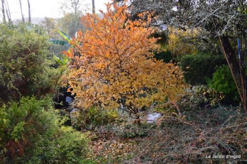 jardin automne ,petits roses 027.JPG