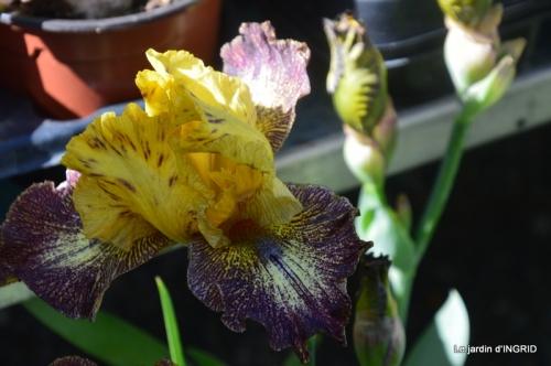 muguet,féte des fleurs Lalinde,jardin 082.JPG