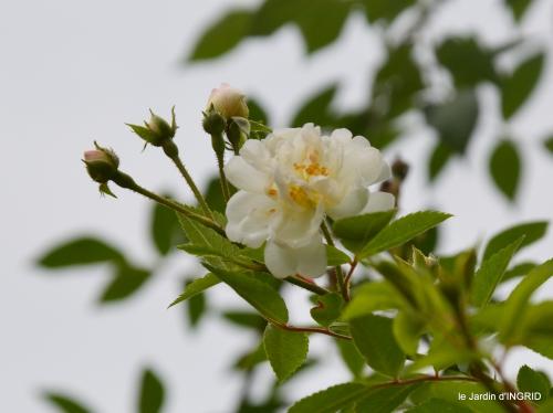 jardin pluie,chateau Losse 140.jpg
