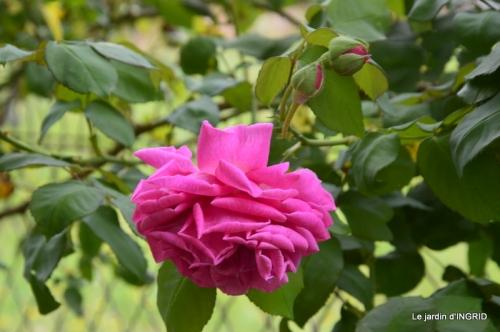 tour de France,jardinde Mme Peyrichou 025.JPG