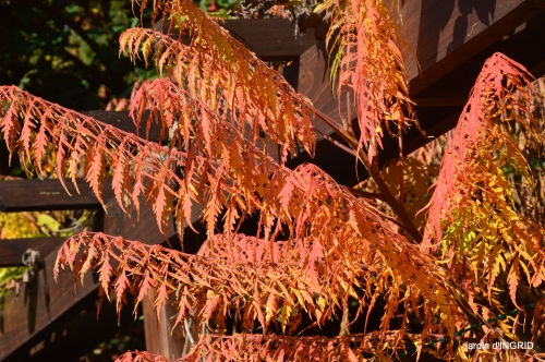 Jardin à l'automne 054.jpg