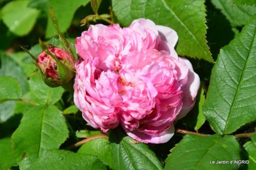 Cadouin,ancolies,roses,pollen,osier,photos Fabien,coquelicots 115.JPG