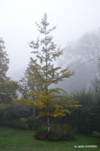 brouillard le matin d'automne 022.JPG