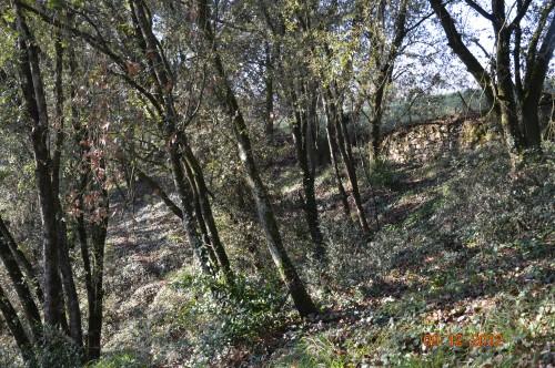 jardiland,déco noel,colline,pt houx 133.JPG