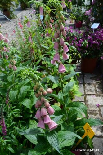 Cadouin,ancolies,roses,pollen,osier,photos Fabien,coquelicots 041.JPG