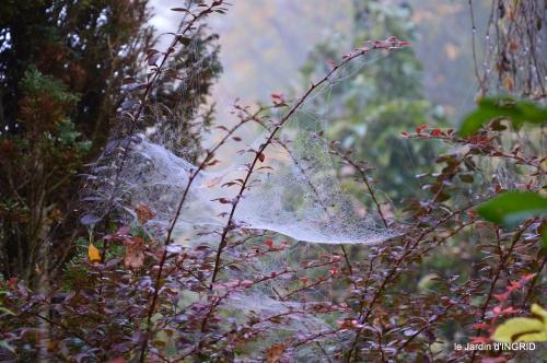 brouillard le matin d'automne 037.JPG