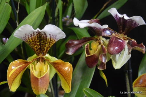 canal,jardin,Mombazillac,bonzais,orchidées 149.JPG