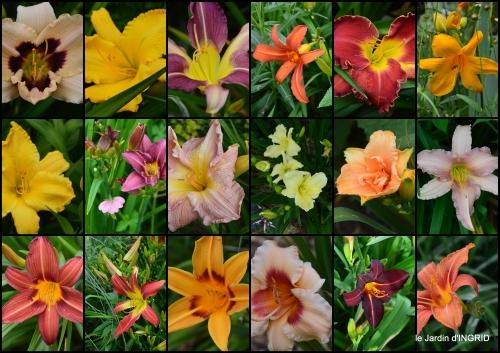 2016-06-12 jardin,chez Bernadette,puces,cygnes,pluie3.jpg