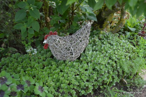 jardin matin,Romane ,nicky 016.JPG