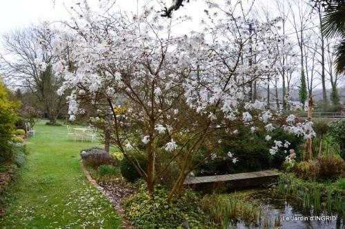 jardin (3 semaine de mars) 078.JPG