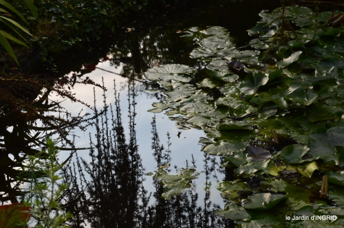 jardin en septembre,les cygnes 145.JPG
