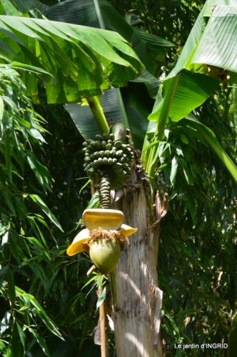 bambous Roque Gageac,jardin,bouquet 139.JPG