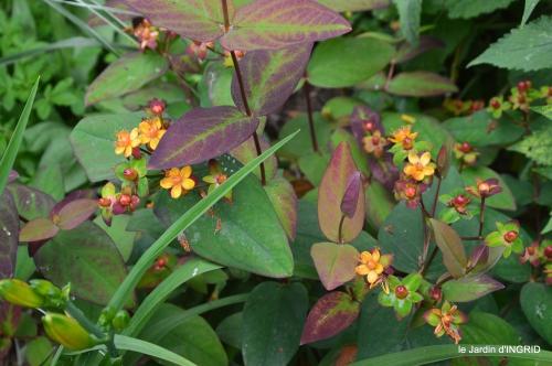 jardin,chez Bernadette,puces,cygnes,pluie 125.JPG