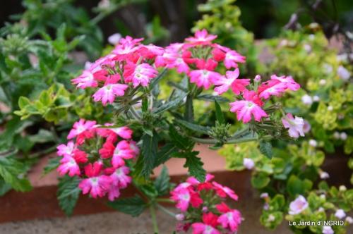 jardin,les filles,gerbera,Lalinde 061.JPG