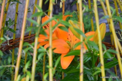 bouquet champêtre,jardin,hémérocalles,nénuphards 134.JPG