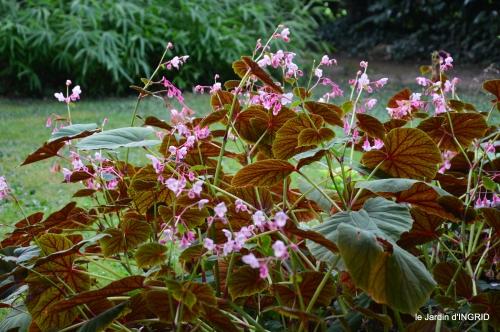 jardin en septembre,les cygnes 130.JPG
