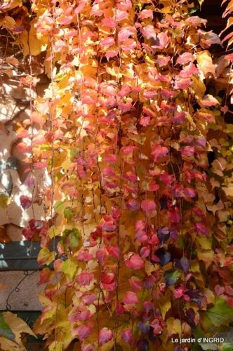 canal,automne,tonte des feuilles 001.JPG