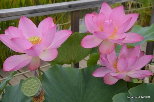 orage,puces,bouquet,Anniv.Ines,Brantome,Jardins d'eau 271.JPG