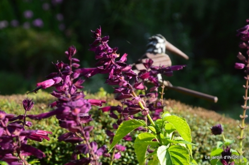 lantanas,jardin aout, 045.jpg