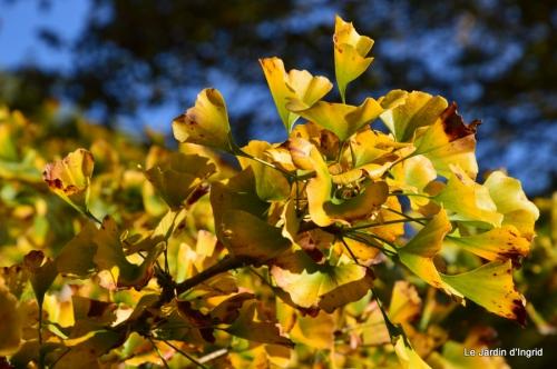 jardin automne,Arya avec Nicky 020.JPG