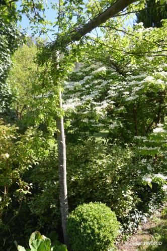 colline,orchidée,nature,jardin fleuri 113.JPG
