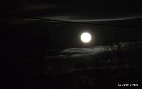 nichoir,vitrine,pleine lune 021.JPG