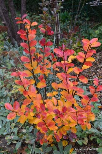 canal automne ,jardin,Ines 079.JPG