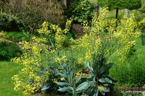 canards,pivoine,malus,abeilles,jardin 087.JPG