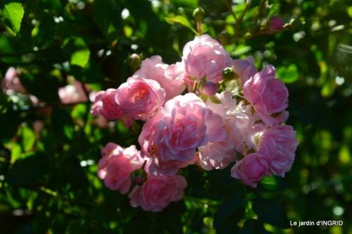 fleurs petit jardin,bouquets,grand jardin 051.JPG