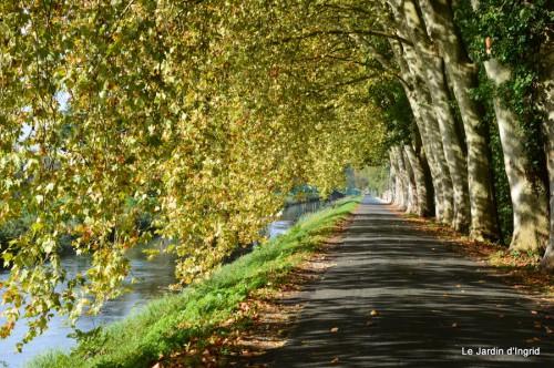 sauges,plectanthrus,Romane,canal,manthe r.,automne 049.JPG
