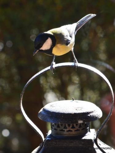 Mompazier,oiseaux,givre 113.JPG