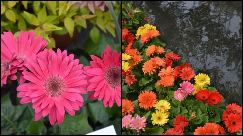 2013-05-01 chateau  Banes,marché fleurs Lalinde6.jpg