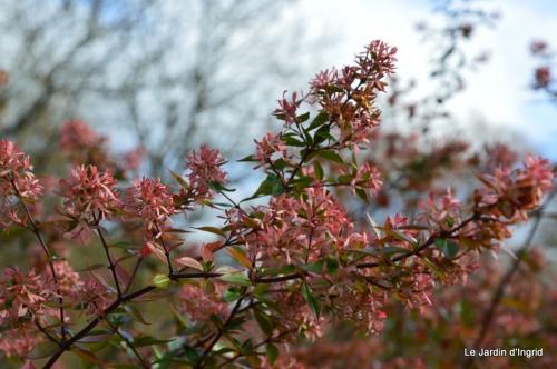 les tons roses,choux frisés,automne 097.JPG