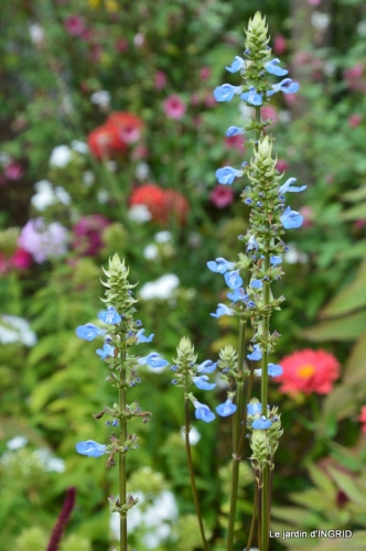 jardin,papillons,anniversaire d'Ines,bricolage 075.JPG