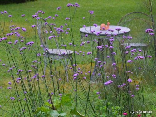 mon jardin,dégats buis, 102.JPG