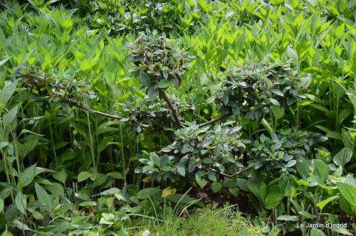 jardin,visites enfants 069.JPG