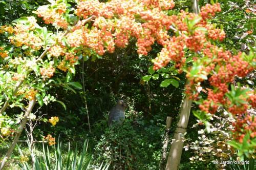 jardin,puces Lasmonzie,asters 076.JPG